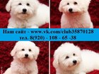 Фото в Собаки и щенки Продажа собак, щенков Чистокровные белоснежные щеночки бишон фризе в Иваново 28000
