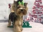 Смотреть фото  Стрижка собак в Петергофе 54779616 в Санкт-Петербурге