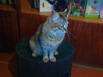 Скачать бесплатно изображение Отдам даром - приму в дар Отдам в добрые руки кошку 33581748 в Иваново