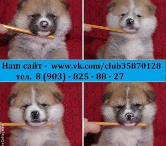 Фотография в Собаки и щенки Продажа собак, щенков В продаже очень милые и симпатичные щеночки-малыши в Иваново 0