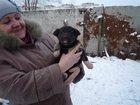 Фотография в Собаки и щенки Продажа собак, щенков Щеночки-девчонки ищут дом, живут на предприятии в Ижевске 0