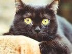 Увидеть foto Отдам даром Кошечка полуэкзот в добрые руки, 36756640 в Ижевске