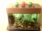 Фотография в   Продам аквариум б/у 80 литров. В комплекте в Ижевске 1000