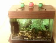 Продам аквариум Продам аквариум б/у 80 литров. В комплекте аксессуары и рыбки.