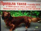 Увидеть фото  Пропала собака 33329084 в Ярославле