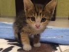 Новое изображение Отдам даром Отдам котенка в добрые руки 33680353 в Ярославле