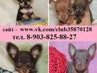 Фотография в Собаки и щенки Продажа собак, щенков По минимальным ценам продам чистокровных в Ярославле 6500