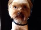 Смотреть foto Услуги для животных Стрижка собак и кошек Ярославль 36958560 в Ярославле