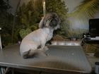 Фото в Собаки и щенки Стрижка собак ПРЕДЛАГАЮ СТРИЖКУ СОБАК МЕЛКИХ И СРЕДНИХ в Ярославле 0