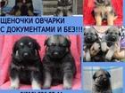 Фотки и картинки Немецкая овчарка смотреть в Ярославле