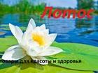 Скачать бесплатно фото  Товары для красоты и здоровья, производства Тайланда и гос заводов Китая 41691027 в Калининграде
