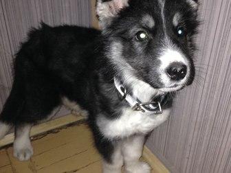 Скачать бесплатно foto Продажа собак, щенков Очень Срочно! В добрые руки! 37765477 в Калининграде
