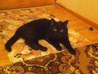 Смотреть изображение Вязка Черный кот встретится с кошечкой на своей территории 32673027 в Калуге