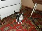 Смотреть изображение  Отдадим даром котят 37060163 в Калуге