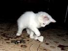 Фотография в Отдам даром - Приму в дар Отдам даром Отдадим в дар в хорошие руки котенок 3 месяца, в Калуге 0
