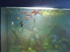 Фотография в Рыбки (Аквариумистика) Аквариумные рыбки Продам аквариум на 200 литров, заводское в Калуге 4000