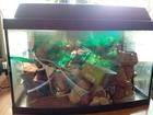 Просмотреть foto Аквариумы Продаю б, у аквариум в комплекте со всем необходимым оборудованием 67976119 в Калуге