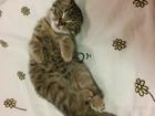 Скачать изображение Отдам даром - приму в дар Отдам даром маленького котенка, 68426858 в Калуге