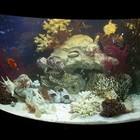 Запуск, продажа и обслуживание аквариумов