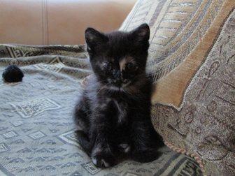 Скачать бесплатно foto  Котёнок в добрые руки 32917393 в Калуге