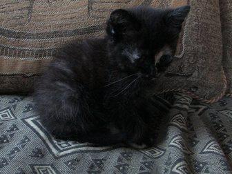 Смотреть фотографию  Котёнок в добрые руки 32917393 в Калуге