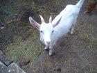 Новое изображение Другие животные продам 33154358 в Канске