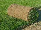 Смотреть foto  рулонный газон 34995090 в Казани