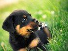 Просмотреть foto  Гостиница для собак 35093417 в Набережных Челнах