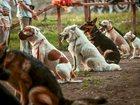 Изображение в   РОО Федерация спортивно-прикладного собаководства в Кемерово 2000