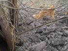 Изображение в   найдет кот пушистый яркорыжий очень ласковый в Кемерово 0