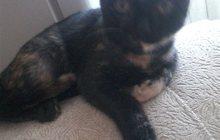 Кошка Плюшка