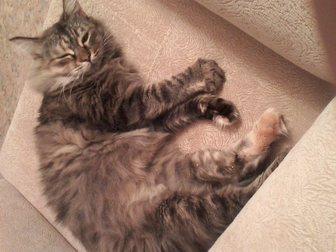 Новое фото Отдам даром Кошка Маша ищет дом 33853523 в Кемерово