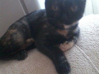 Просмотреть foto Отдам даром Кошка Плюшка 33853581 в Кемерово