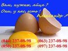 Изображение в Прочее,  разное Разное Яйцо куриное, оптом и в розницу, с доставкой в Киеве 0