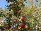 Новое изображение  Продаю сад, баню, Торг уместен, 51735596 в Кирове