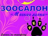 Стрижка собак и кошек в Клину, Зоосалон Мягкие лапки Стрижка cобак и кошек в Кли