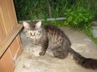 Смотреть foto Отдам даром - приму в дар Найден милый и очень ласковый домашний кот 39755346 в Коломне