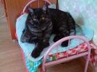 Уникальное foto Найденные питомцы помогите найти домашнего кота 51065507 в Коврове