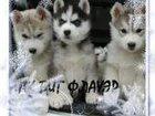 Изображение в Собаки и щенки Продажа собак, щенков Профессиональный питомник предлагает к продаже в Краснодаре 0