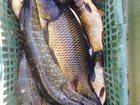 Скачать бесплатно foto  Рыбалка и отдых в Краснодарском крае на майских праздниках 32623443 в Краснодаре
