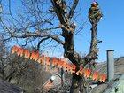 Фото в   На вершине дерева другие законы, там важна в Краснодаре 0