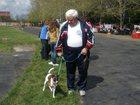 Изображение в Собаки и щенки Вязка собак Предлагаем для вязки суку гладкошерстного в Краснодаре 0