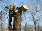 Фотография в   Профессиональное удаление деревьев, в том в Краснодаре 350