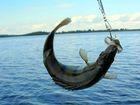 Уникальное foto Рыбалка Охота и рыбалка на Волге, Пляж на Базе Булгарский дворик 35432171 в Липецке