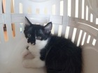 Фотография в   Кошка родила 6 котят. Большинство уже нашли в Краснодаре 0
