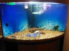 Фотография в   Продаю угловой, панарамный аквариум, с рыбками в Краснодаре 45000