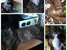 Фотография в Кошки и котята Вязка Молодой котик приглашает кошечку к себе в в Краснодаре 0