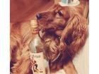Скачать foto Вязка собак Опытный кобель ищет подругу, английский кокер-спаниель, 4 года 39635197 в Краснодаре