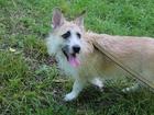 Увидеть изображение Отдам даром - приму в дар Отдам собачку в добрые руки бесплатно 40636787 в Краснодаре