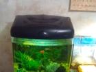 Скачать бесплатно foto Другие животные Качественный аквариум 50 л со всем содержимым 40757538 в Краснодаре